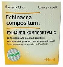 Ехінацея